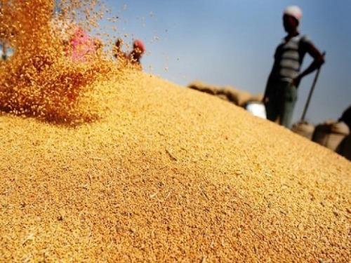 Африканские страны увеличивают закупку зерна из России